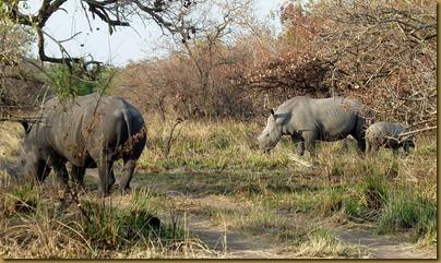 Ziwa, Murchison Falls trip 097