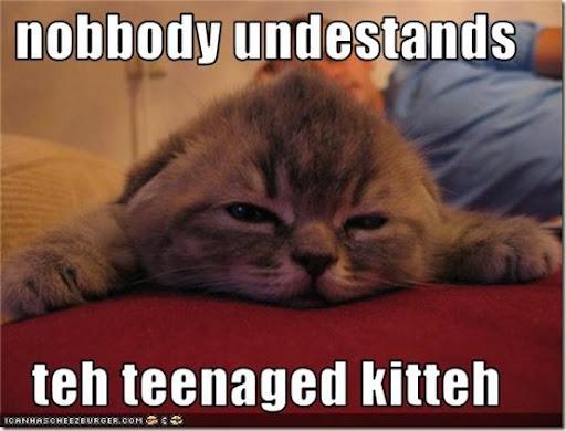 funny-pictures-kitten-is-misunderstood_thumb%25255B1%25255D.jpg