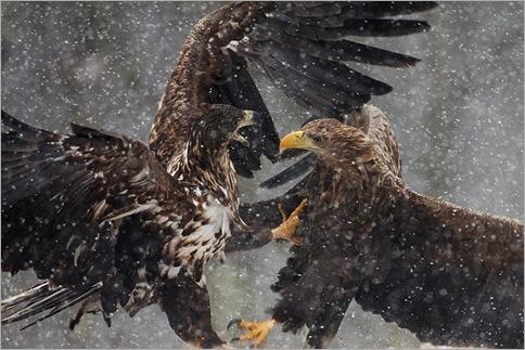 Wild-Animals-Fights-12