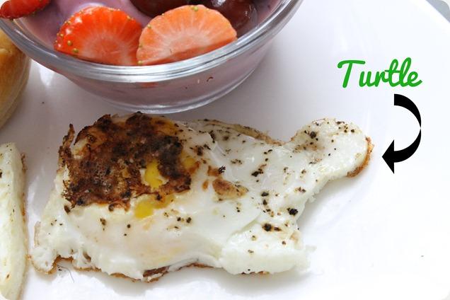 valentine's date turtle egg