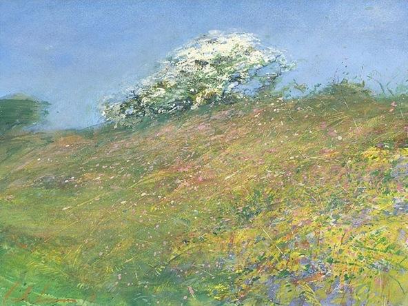 hawthorn_blossom_boscawen_noon