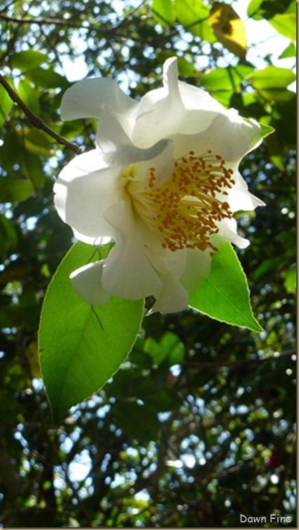 Magnolia Plantation_167