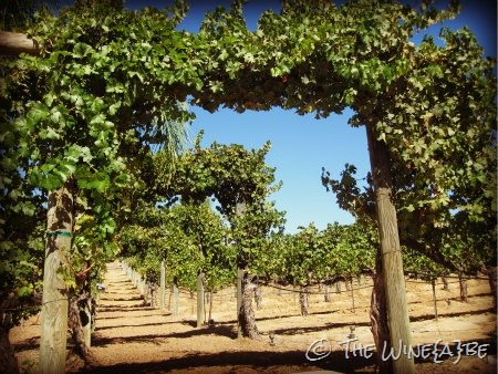 grape_arbor