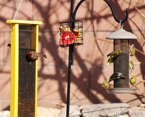 1. bird feeders-kab