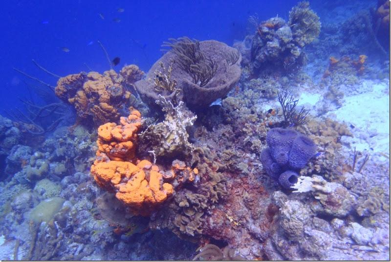 023k bunte korallen