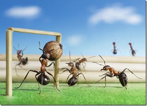 furnici la fotbal