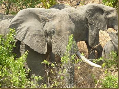 Ziwa, Murchison Falls trip 329