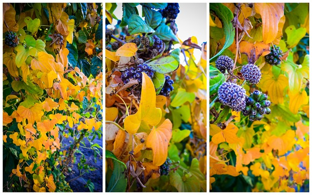 Changnyeong Autumn