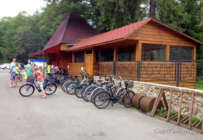 Беловежская пуща велосипеды