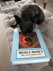 Franny Reads up on Chow Chows