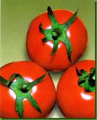 Tomate Market Wonder
