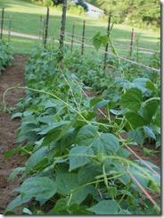garden 2012 016