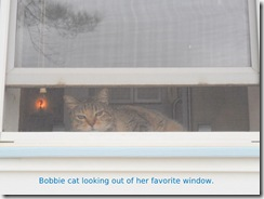 Bobbiecat watching the traffic
