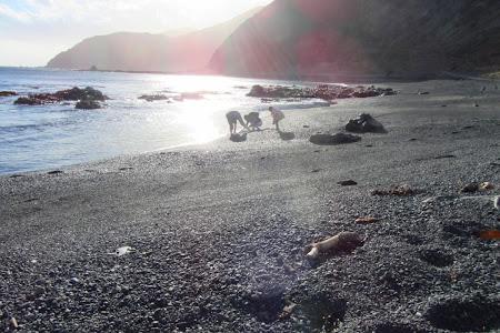 Obiective turistice Wellington: cautand scoici Paua