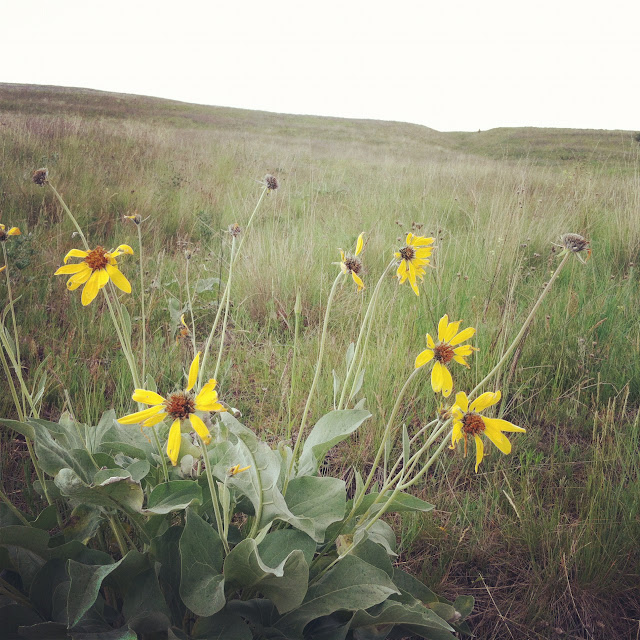 Wild flowers on Mount Sentinel