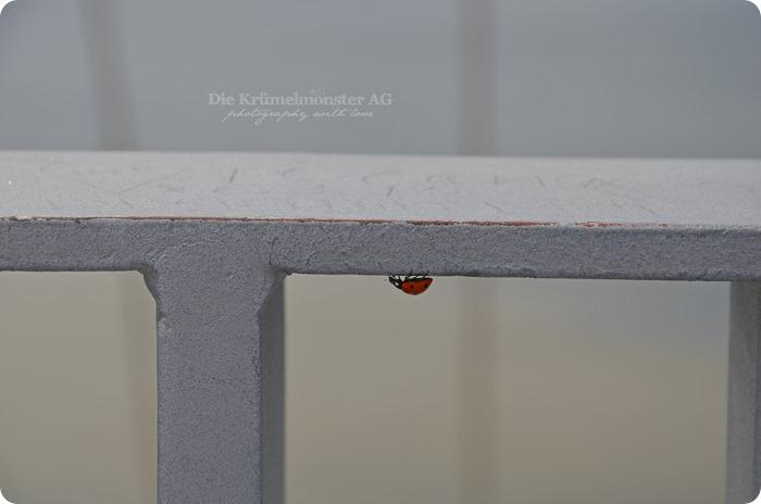 Wremen 29.07.14 Bremerhaven 77 Aussichtsplattform