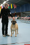 20130510-Bullmastiff-Worldcup-1007.jpg