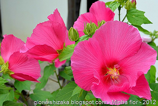 Glória Ishizaka - minhas flores - 2012 - 3