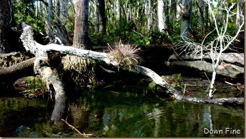 Chassahowitza River canoeing_130