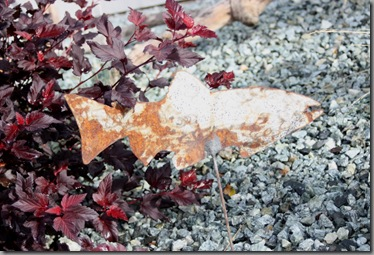 rusty salmon with Physocarpus Center Glow