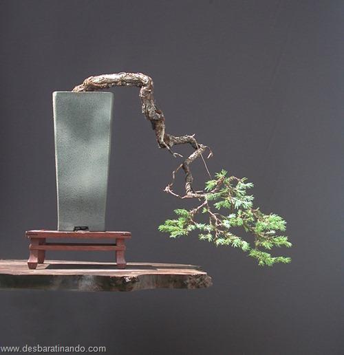 bonsais arvores em miniatura desbaratinando (1)