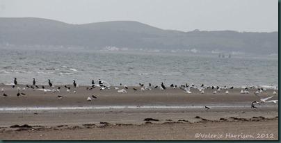 46-seabirds