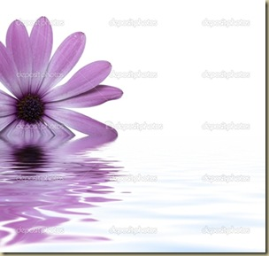 depositphotos_1724171-Flower-floating-in-water