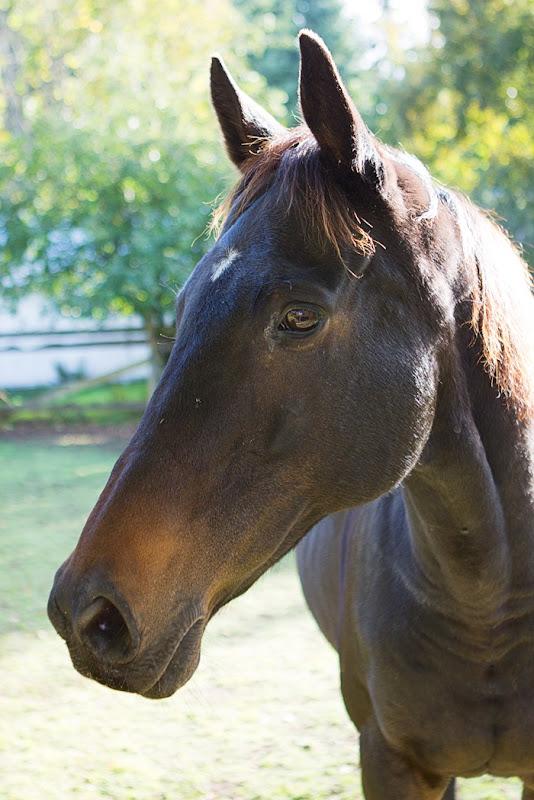 CeCe the horse