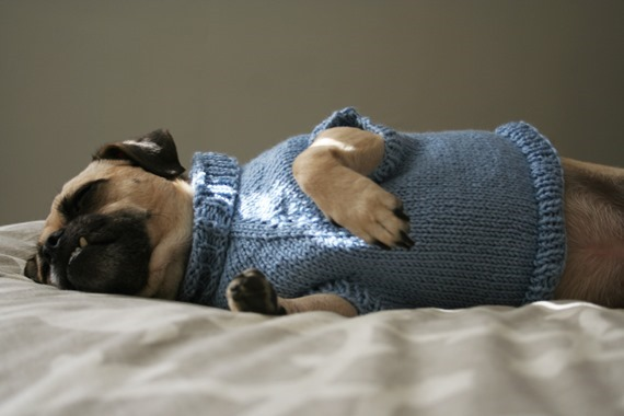 DogSweater1