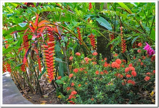 130713_TropicalGardensOfMaui_Heliconia-rostrata_006