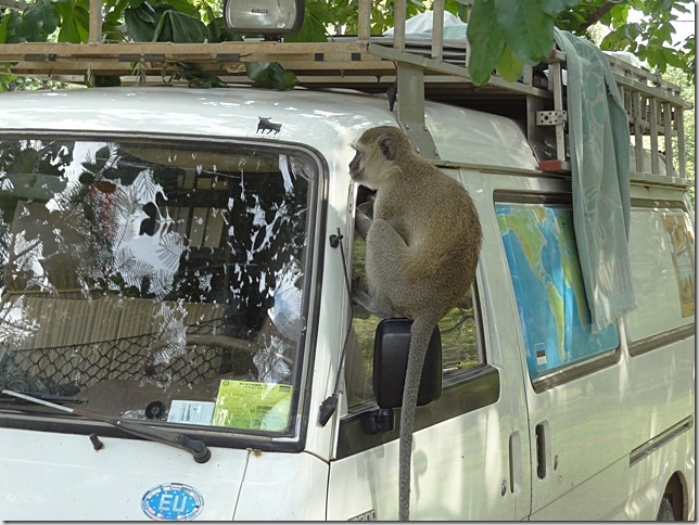 Mazda_van_and_baboon
