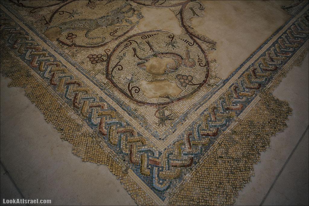 Мозаики от «Доброго самаритянина» (israel  путешествия иудея и самария и интересно и полезно выставки музеи фестивали  20130215 good samaritan mosaic 015 5D3 8373)