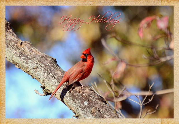 Holiday Card 2012 - 1 copy 2