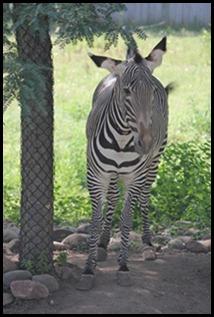 Zoo5 076
