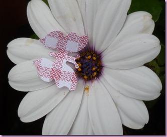 farfalle in giardino (2)