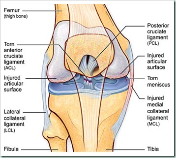 cartilage knee etc