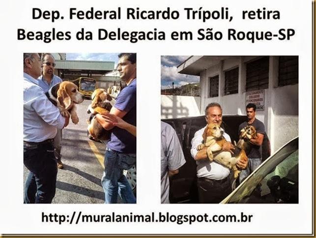 dep-tripoli_beagles