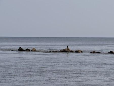36. Varsarea Dunarii in Marea Neagra.JPG