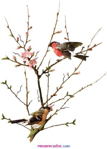 69848550_1-Imagens-de-Revele-toda-a-sua-beleza-com-Bodycare-jardins-RAugusta2072