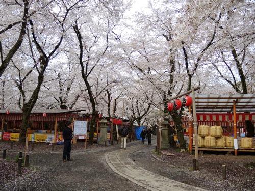 平野神社花見茶屋への道