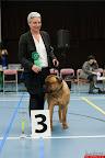 20130511-BMCN-Bullmastiff-Championship-Clubmatch-1912.jpg