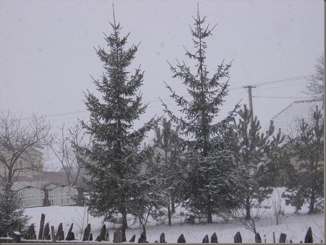 Zima 002