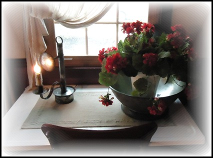 Geraniums in kitchen