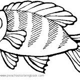 fish 11.jpg