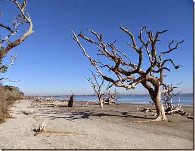 ga_eoy_jekyll_driftwood_beach_5