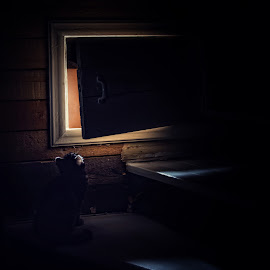 Curious by Jukka Pinonummi - Animals - Cats Kittens ( kitten, cat, stairs, curious, dark, hatch, puppy, baby, light, small )