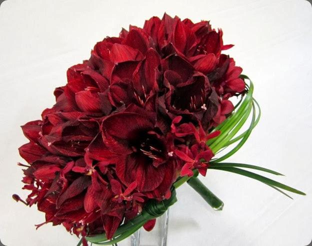 amaryllis 423600_581652628526853_719543620_n enmasse flowers