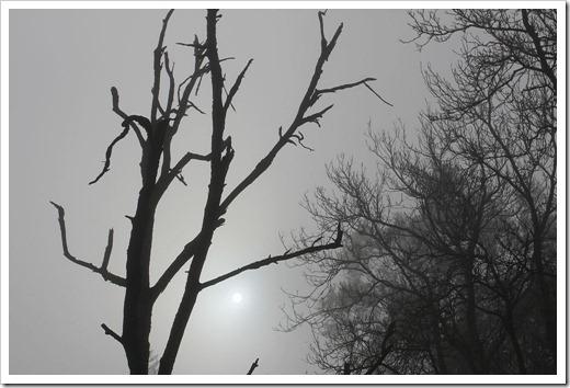 101205_trees1
