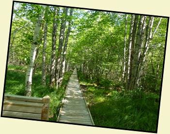 01b - Jesup Path - boardwalk