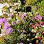The Colors Of Springtime In The Grampians - Halls Gap, Australia